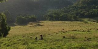 field 500x350px