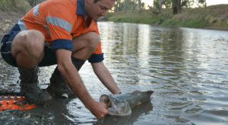 Water and catchment planning, NSW