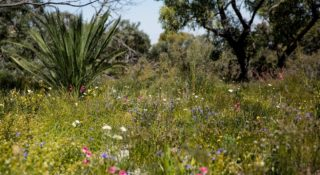 Bushland Management Plan and Flora & Fauna Surveys