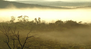 Ecological Community State & Transition Models